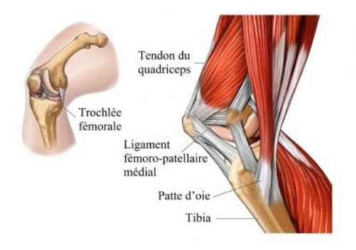 Arthrose:  à faire immédiatement